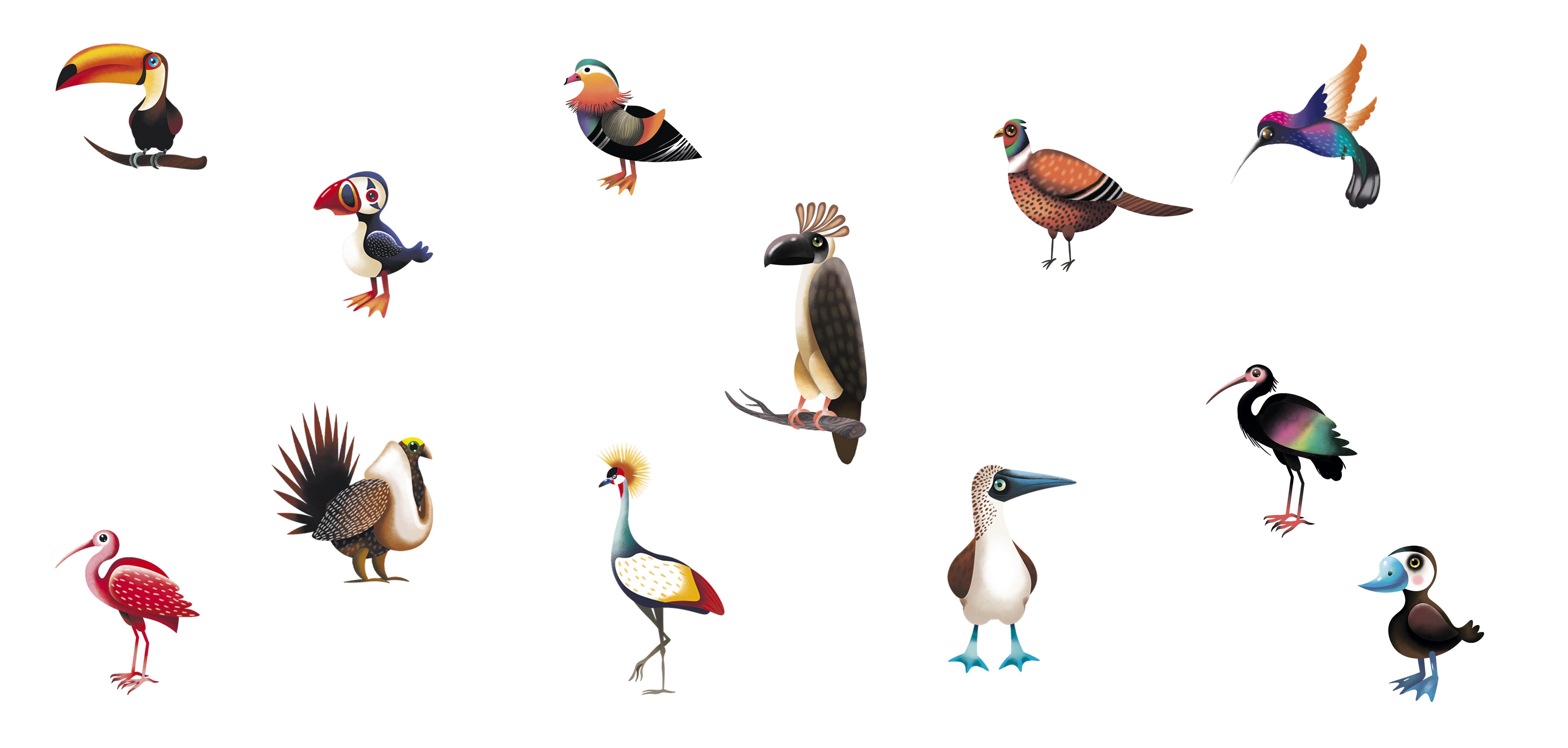 """иллюстрации птиц к настольной игре """"Фотоохота"""""""